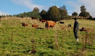 Simon Burgess with cows
