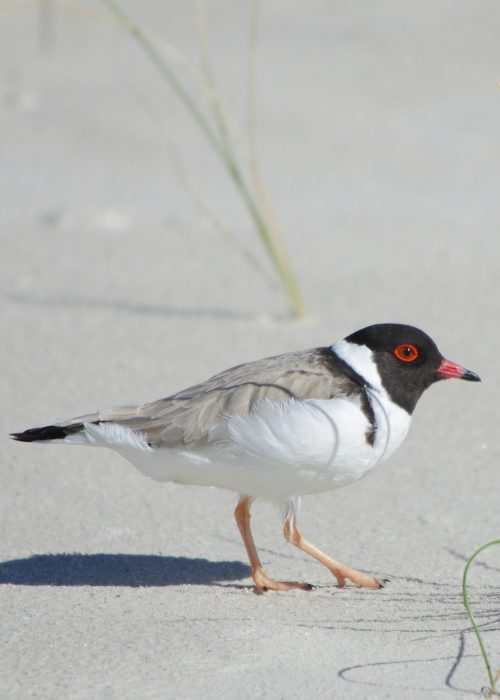Shorebird Protection Activities (2014)