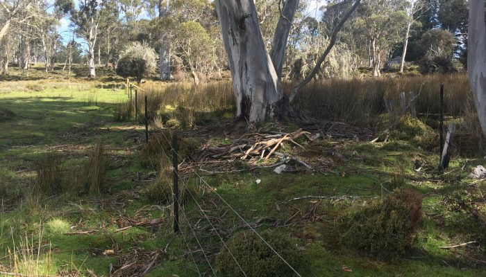 Bronte Fencing photos 2017 1866